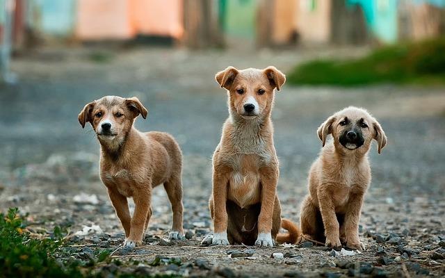 Nom de chien - 3 chiots