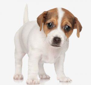 Noms de chiens - Jack