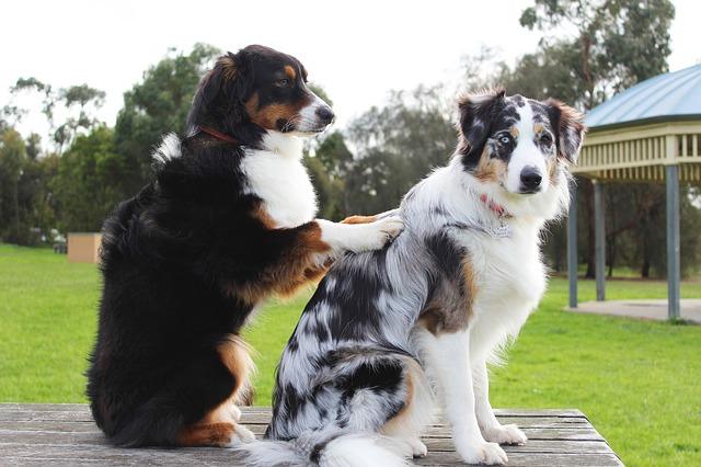 Prender soins de son chien - massage